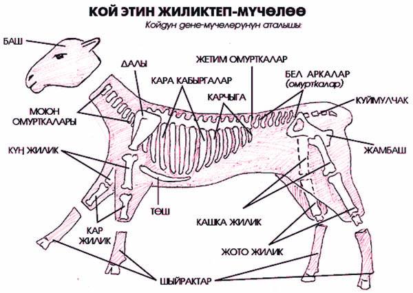 Kırgız Mutfağında Cilik